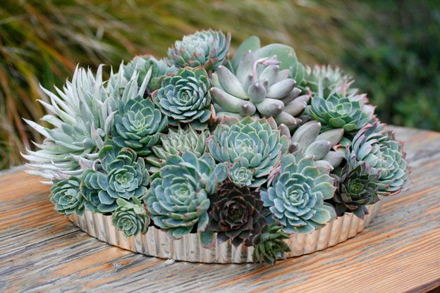 Mobile Landscapes Succulents In Containers Planting Succulents