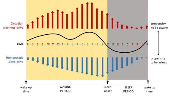 Sleep Science Why Do I Feel Sleepy After Lunch But Not After Dinner Or Breakfast Quora I Feel Sleepy Sleepy After Lunch Up Up