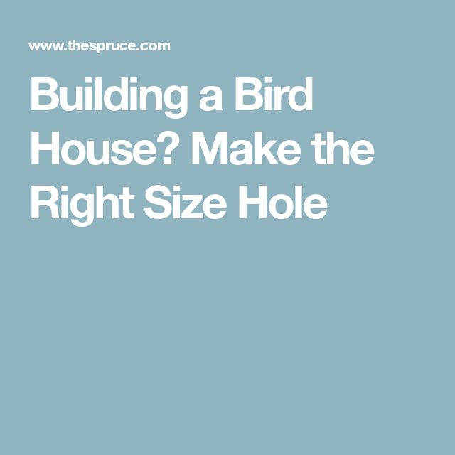 Top 12 Threats To Birds In Your Backyard: Building A Bird House? Make The Right Size Hole