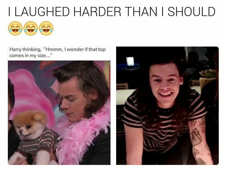 Pin By Lauren B On 1d Quotes Facts Funny Harry Styles Funny One Direction Memes Harry Styles Memes