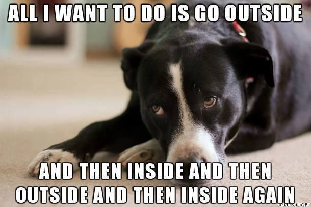 Pin By Diana Foster On Memes Funnies Funny Animal Pictures Funny Animals Animals
