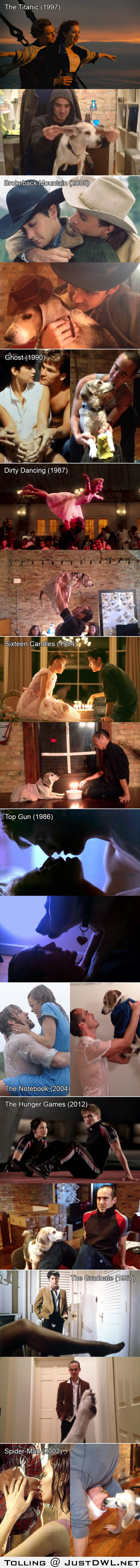 Movie scenes reenacted with a dog
