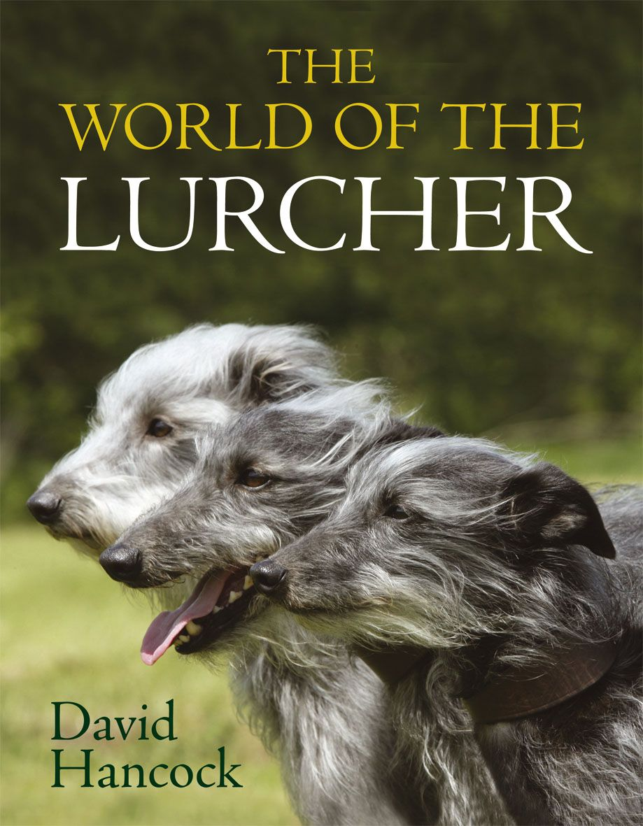The World Of The Lurcher By David Hancock Quiller Publishing