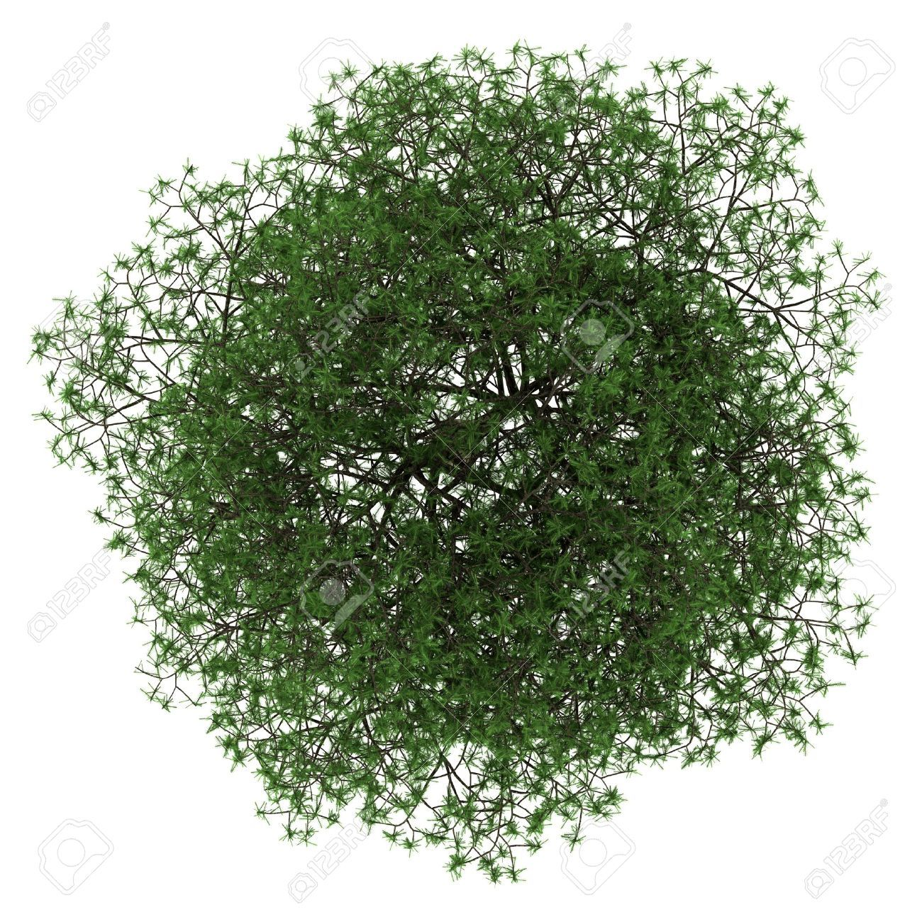 Tree Png Top
