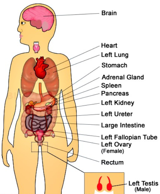 Different Types of Pain in Left Side, Causes and Treatment | Weird ...