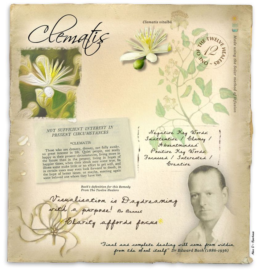 Clematis Bach Flower Remedy For Inattentive Bach Flower Remedies Bach Flowers Flower Remedy