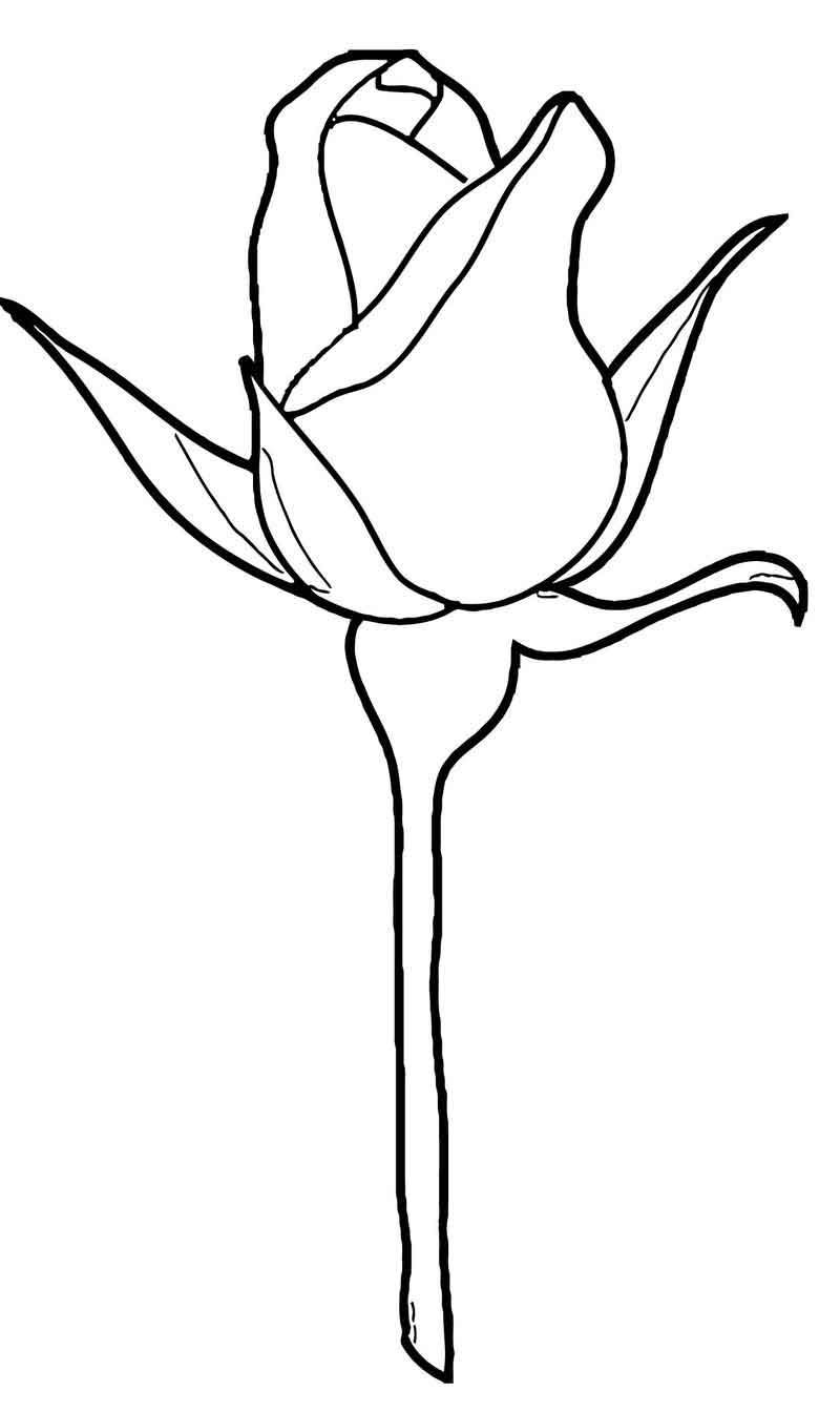 Rose Flower Coloring Page 152 Rose Flower Colors Flower