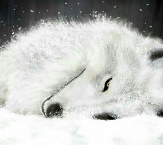 Snow white wolf