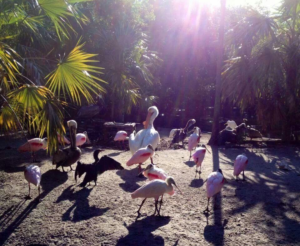 Flamingo Gardens, Davie FLA Pet resort, Flamingo garden