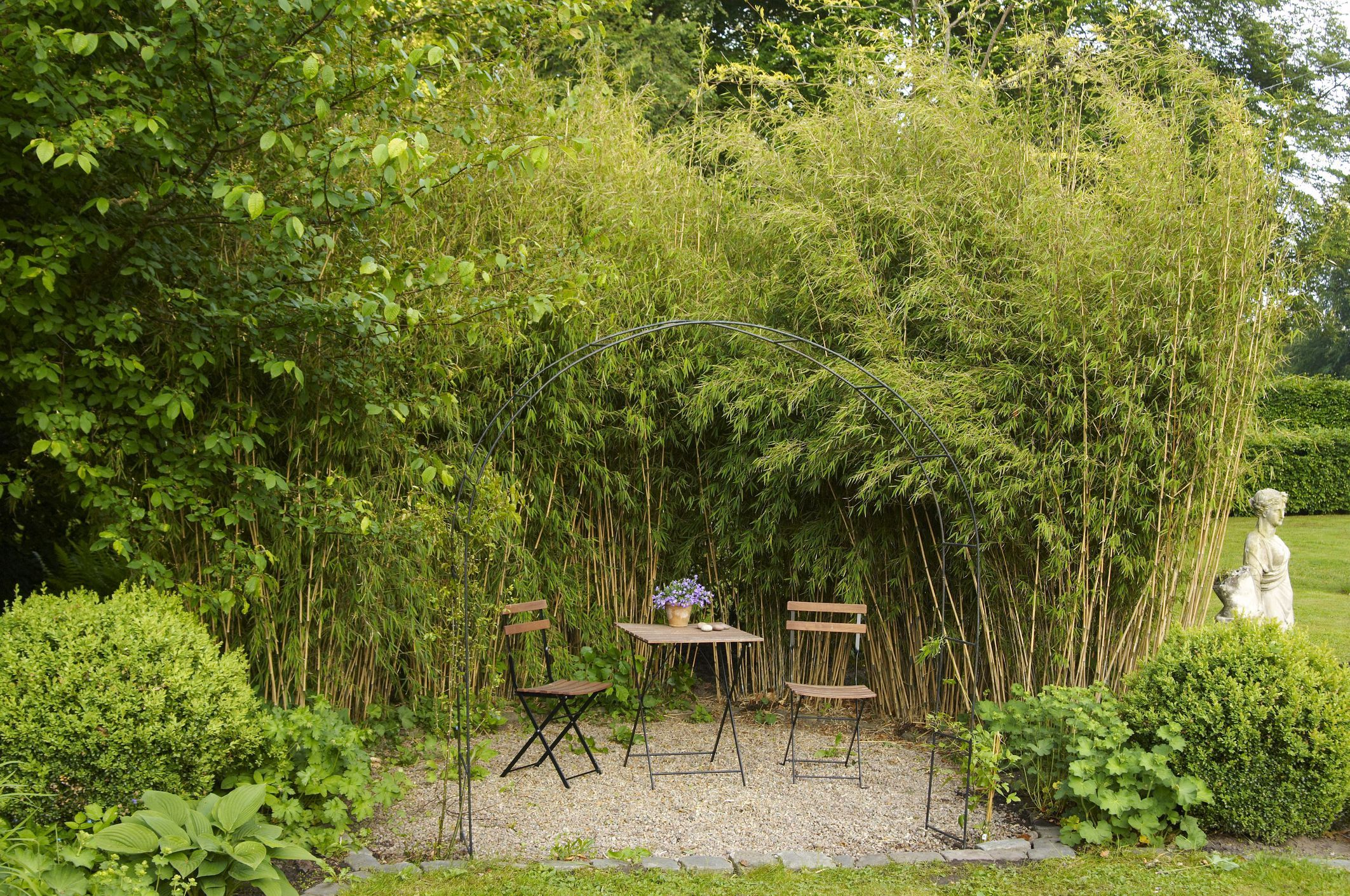 8 Best Ornamental Grasses to Add Privacy to the Garden ...