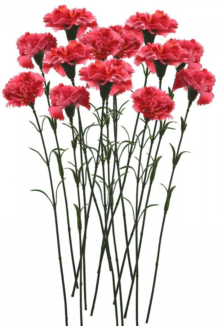 Artificial Single Carnation Stems Set Of 15 Dark Pink Artificial Flowers Fake Flowers Flowers Online