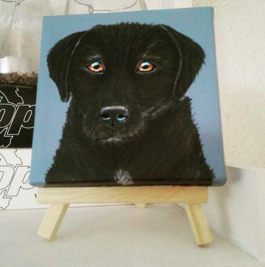 labrador portret