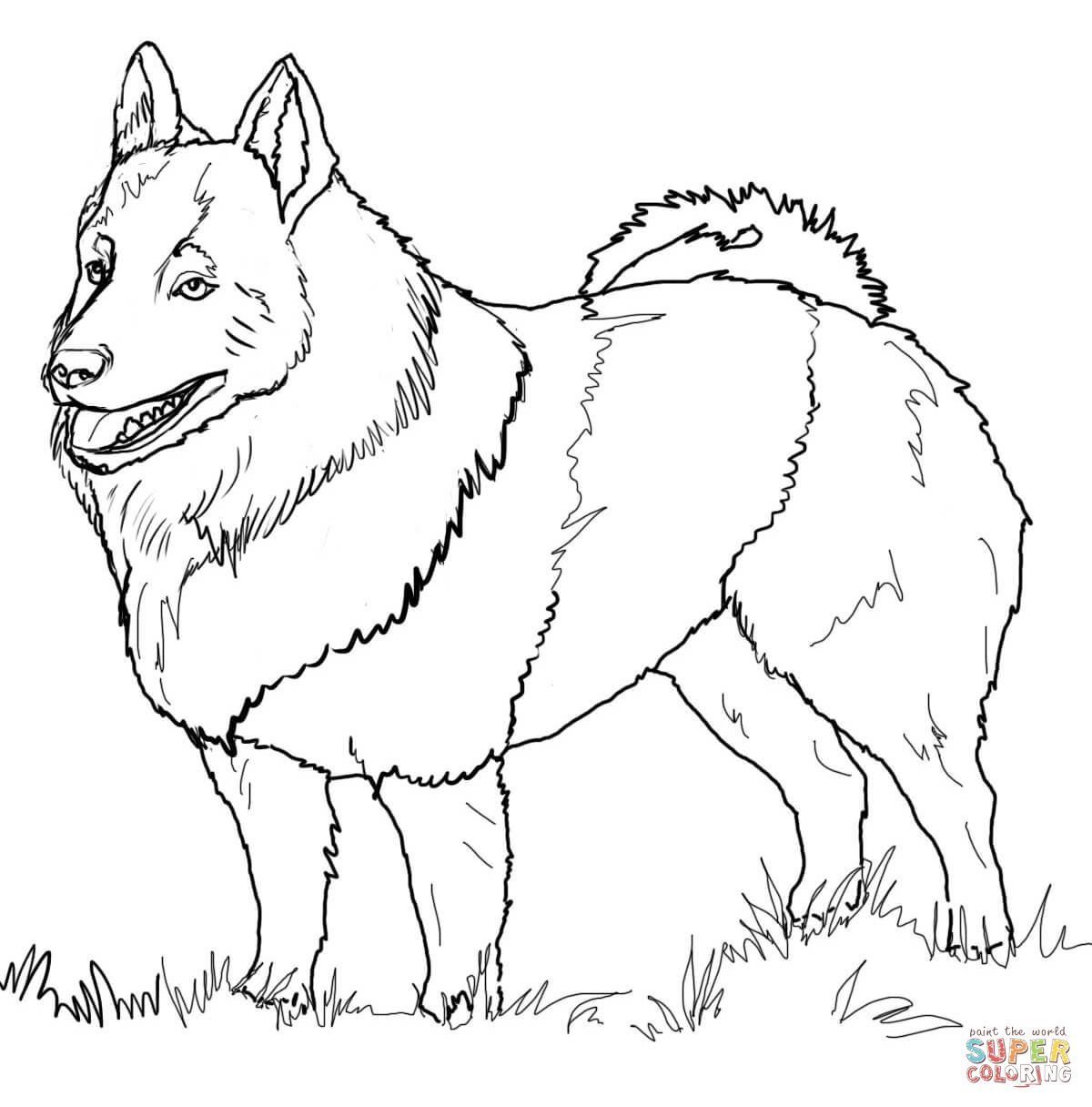 Schipperke Super Coloring Dog Coloring Page Free Printable