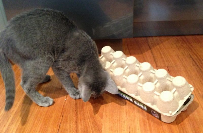 Egg Carton Puzzle Box Cat Stuff for Aussies (With images