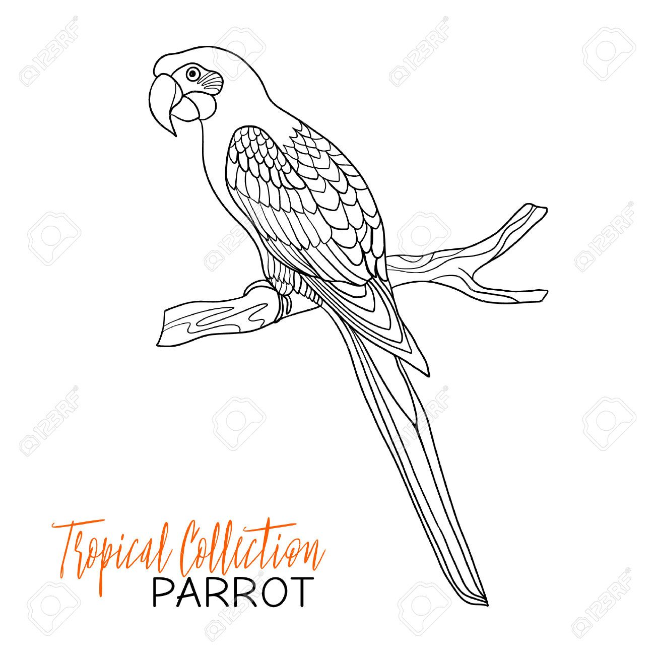 Tropical Bird Vector Illustration Coloring Book For