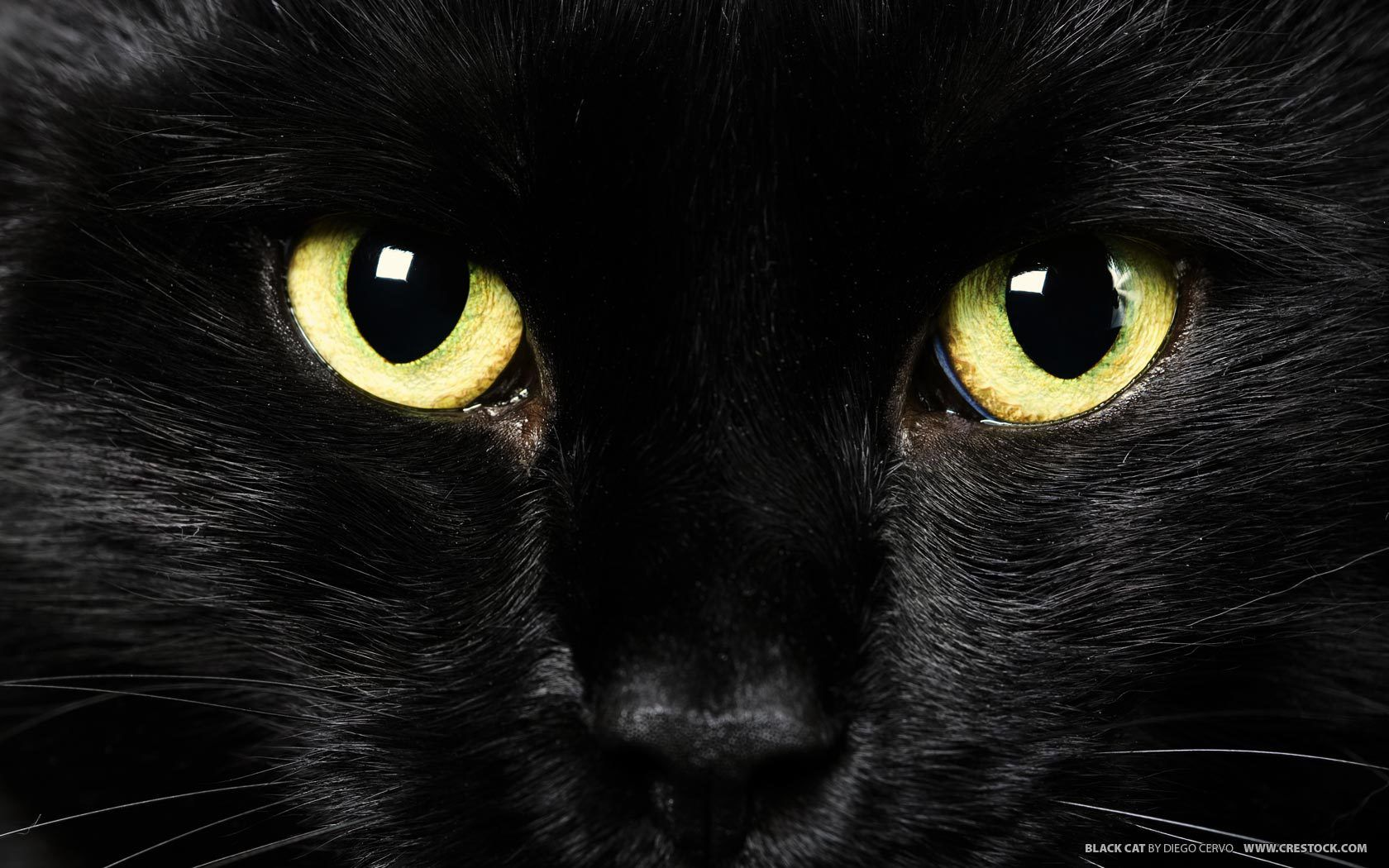 Pin by Tamara Shanks on Hello Yellow! Black cat, Black
