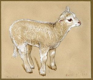 Study of Lamb; whole-length, standing and facing right. 1863   Graphite, with watercolour, touched with white  Drawn by: Jemima Blackburn
