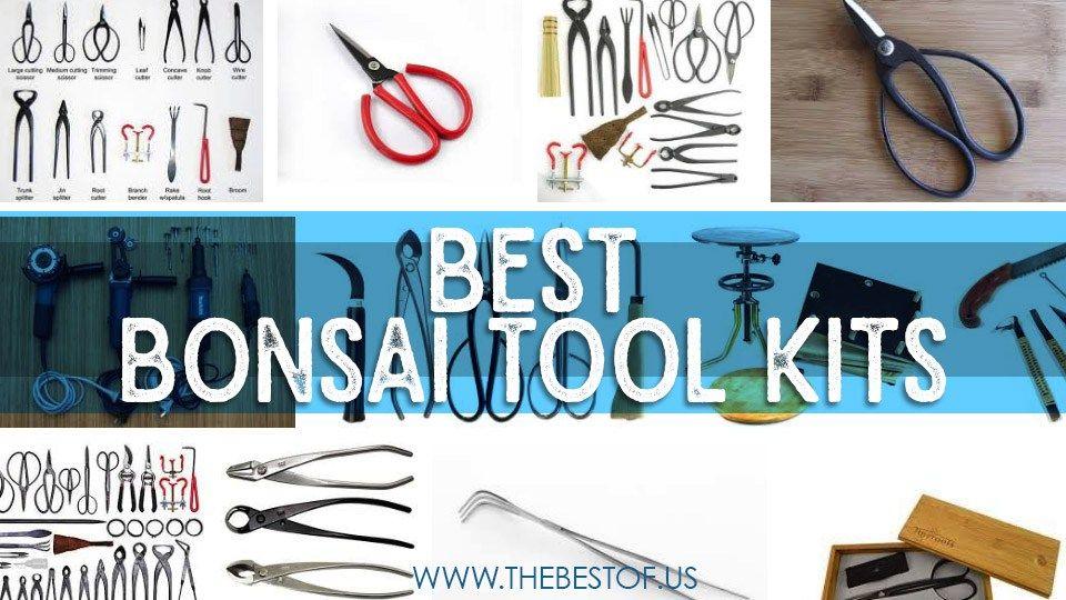 Best Bonsai Tools For Bonsai Lovers