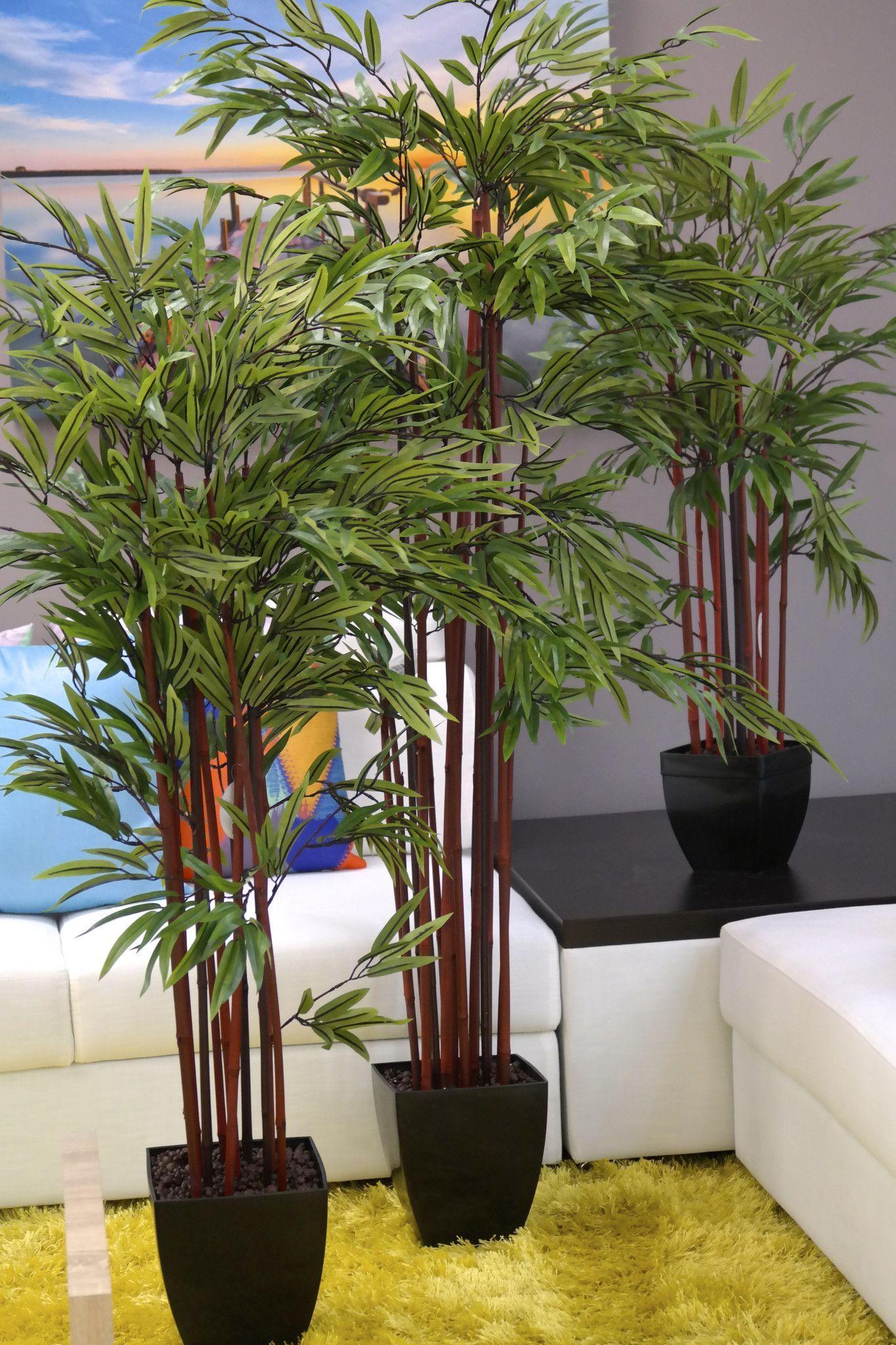 Uncategorized Bamboo Plants In Pots cocos plantation 5 bamboo plant in pot plants pot