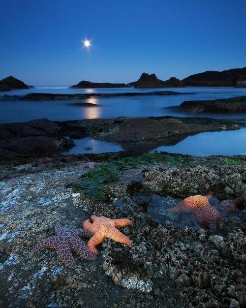 Moonlight Starfish Seal Rock Beach Oregon Oregoncoast