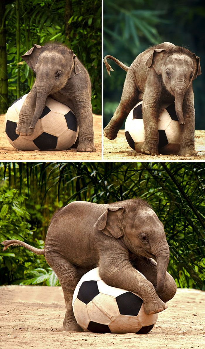 30 Baby Elephants That Will Instantly Make You Smile