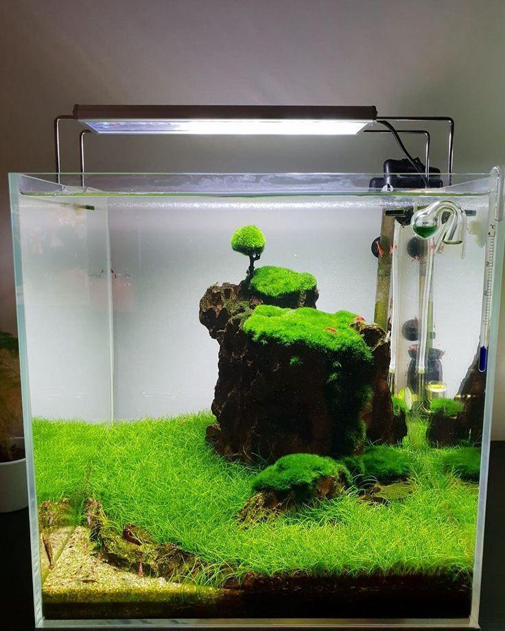 45 Nano Planted Tank Design Inspirations to Displayed at ...