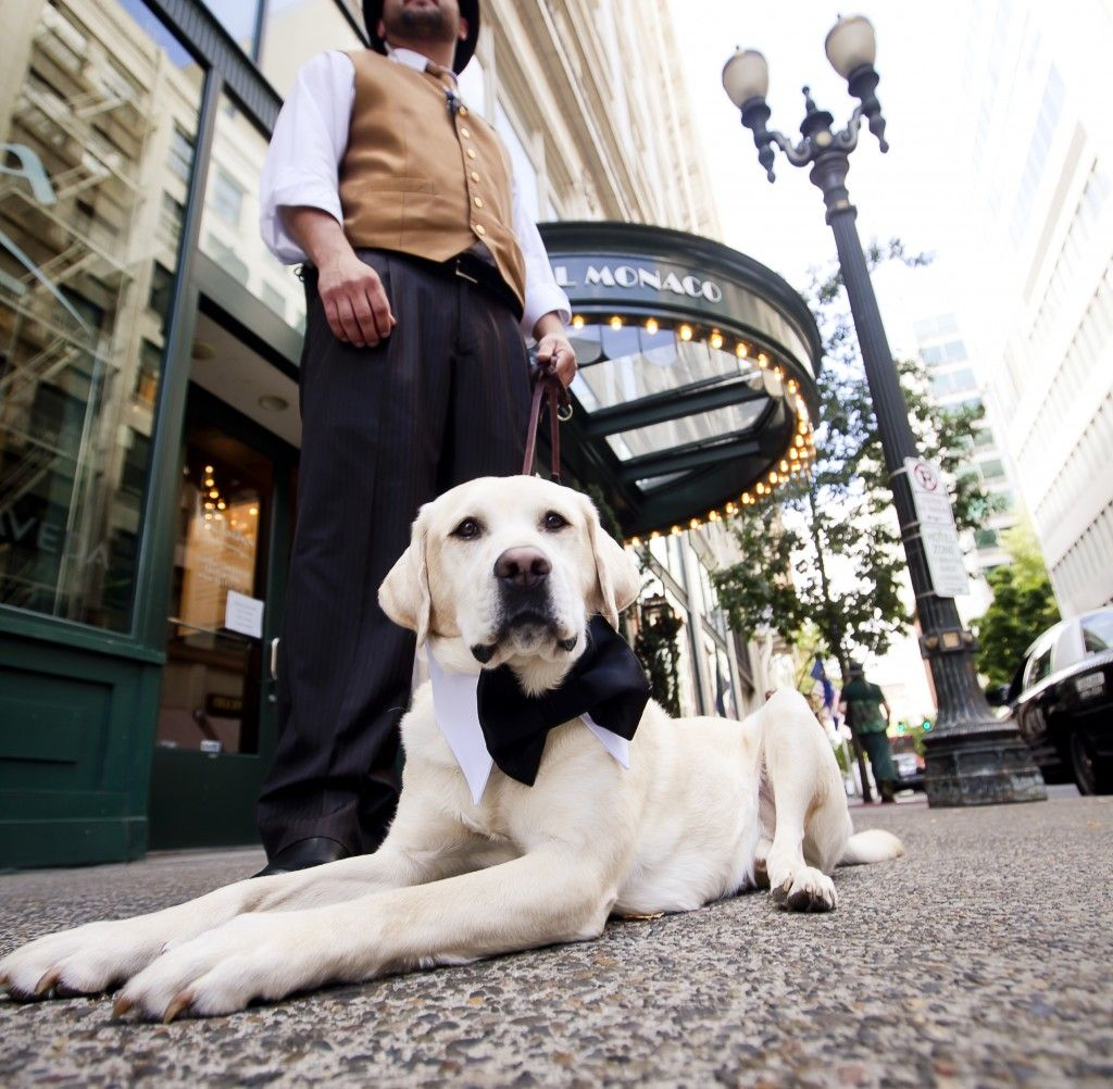 Portland Unleashed Pet Package At The Hotel Monaco Http Www