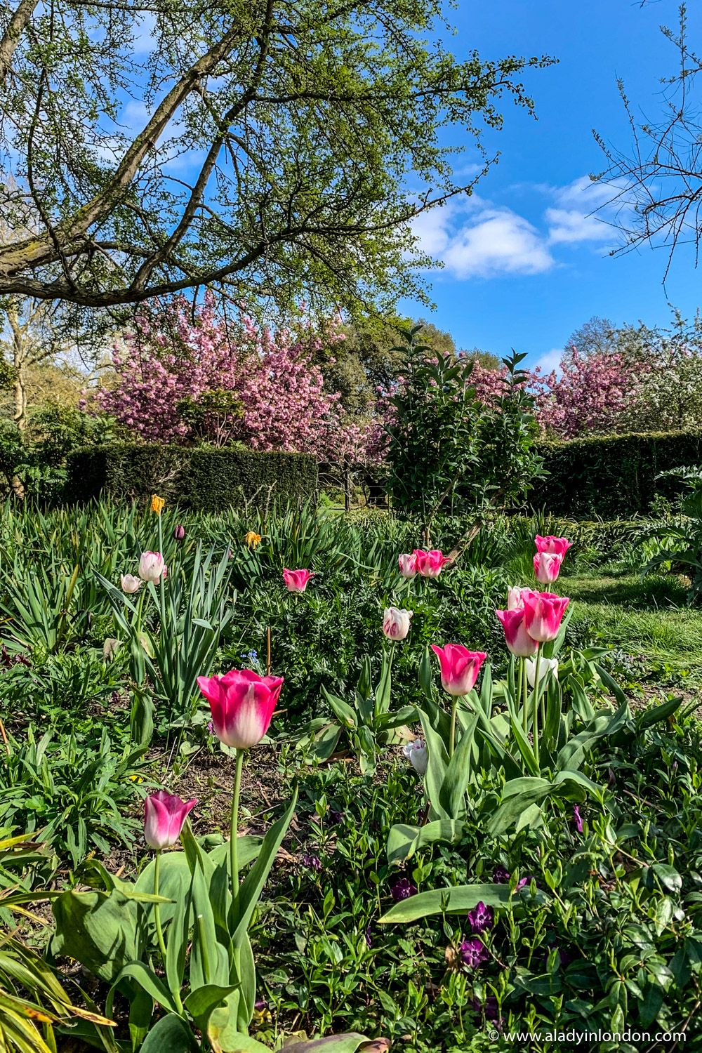 6395bd710adc1d4167fde6a452e1dcbc - Best Gardens To Visit In Spring