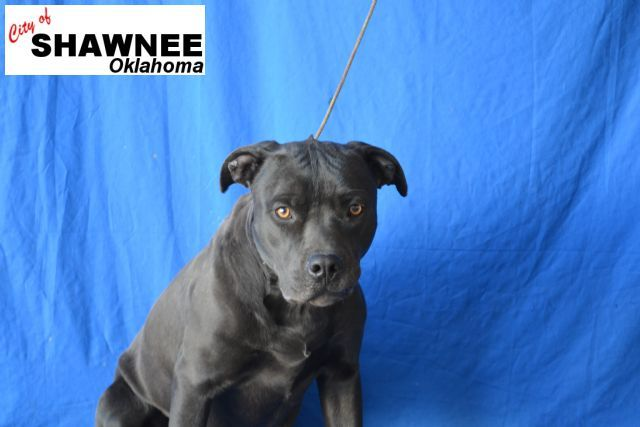 Shawnee Ok Animal Shelter Online Shelter Animal Shelter Animals Shawnee