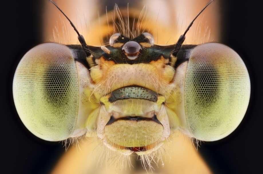 Ekstra Bladet - Kæmpe-galleri: Se de vanvittige 'alien'-insekter
