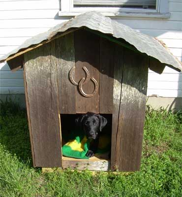 Love The Metal Roof And Horse Shoes On This Doghouse Although Why