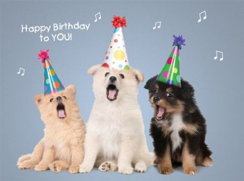 Image result for happy birthday dogs pics
