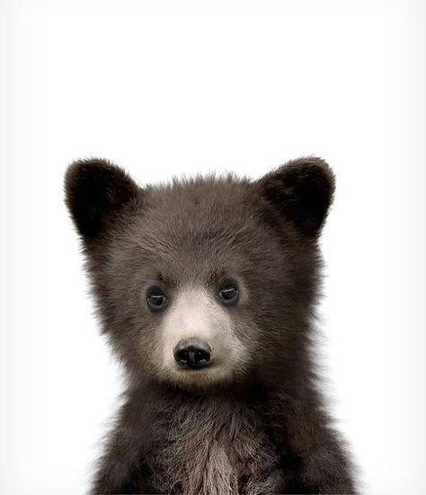Baby bear print, Nursery animal art, Woodland Nursery prints, The Crown Prints, Baby animals, Nursery art, Baby animal wall art, Black bear #bears