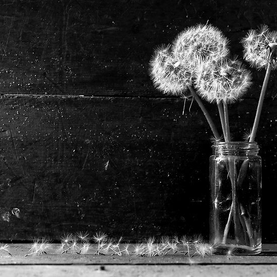 Trampled Rose White Photography Black And White Photography Dandelion