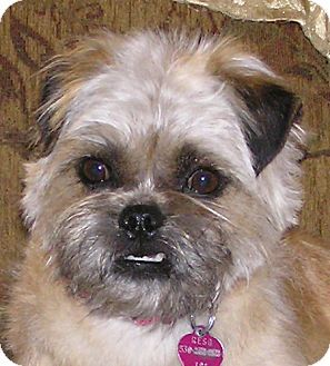 Redding Ca Brussels Griffon Pug Mix Meet Kiki A Dog For
