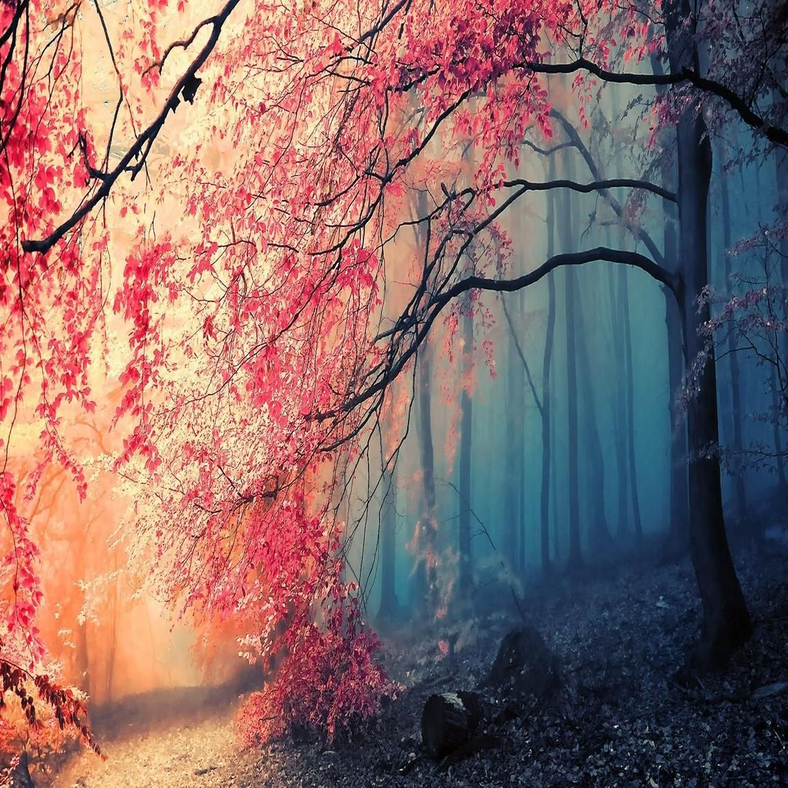 gorgeous forest colors in autumn
