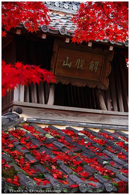https://flic.kr/p/Pi7my9 | 赤落ち葉 | The reddest leaves I saw in Kyoto this year...  (No saturation slider was hurt creating this picture :-)