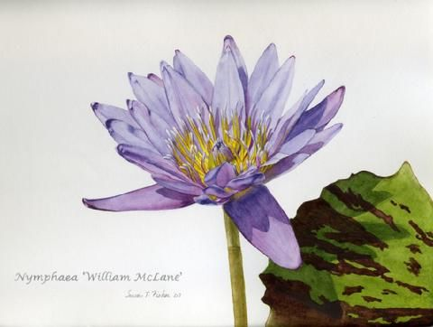 Susan T. Fisher (With images) | Botanical art, Nature ...