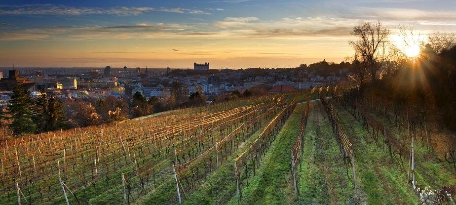 Posledné vinohrady v Bratislave