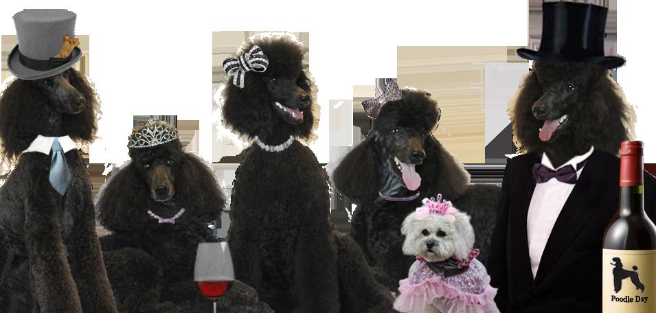 Poodle Day Carmel Ca It S All About Poodles Poodle Poodle Dog Poodle Puppy