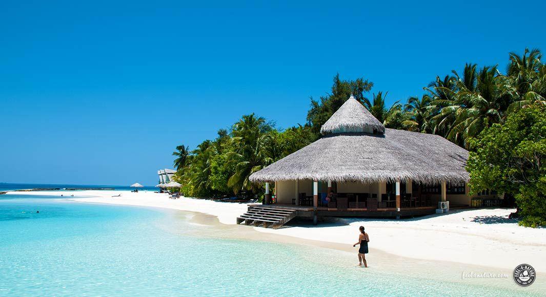 Chaaya Reef #Ellaidhoo #Erfahrungsbericht über eine #Trauminsel auf den #Malediven