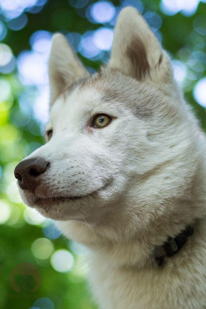 Pin Von Doubleu Auf Dogs Cats Hundefotografie Hunde Und Entlebucher