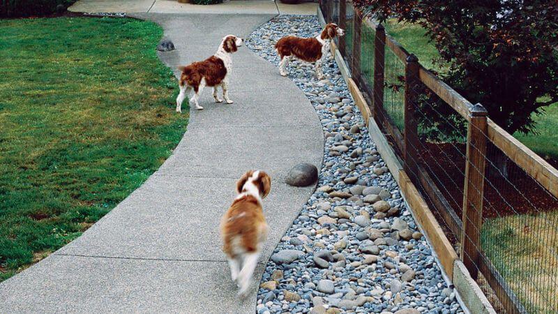 This Garden Was Designed With Dogs In Mind Garden Design Dog Friendly Garden Amazing Gardens