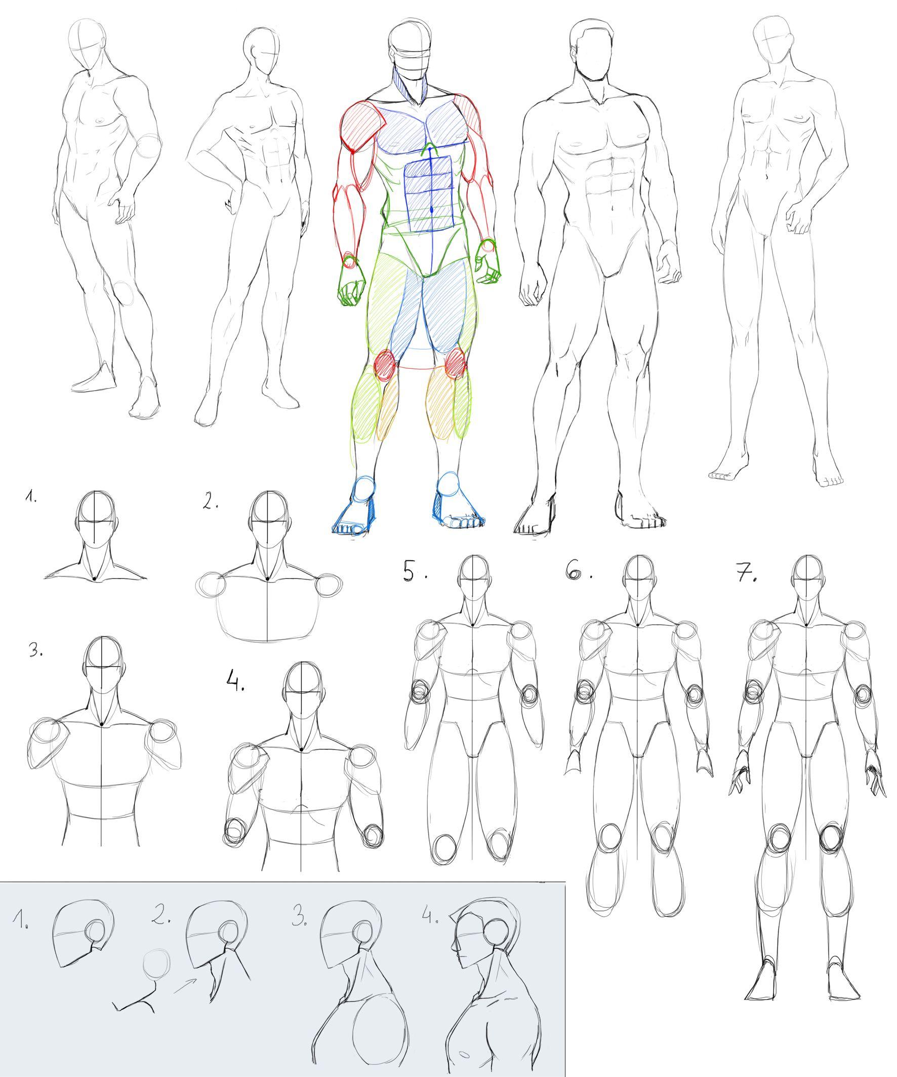 Male Antomy 2 by Precia-T.deviantart.com on @deviantART | Drawing ...