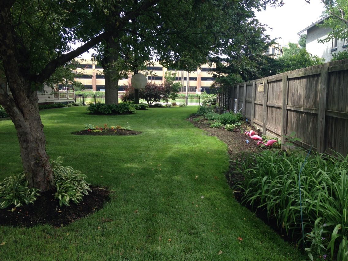 the east yard hostas are great for surrounding shade areas under