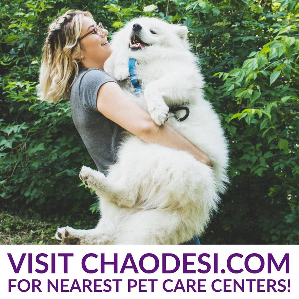 Visit Chaodesi Com Classifieds Yellow Pages And More Pet Dog Pets Animal Cats Petcare Petlove At Wyom Dog Quotes Dog Quotes Love Dog Best Friend