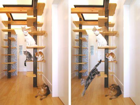 Multilevel cat structure