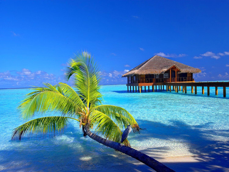 Bora Bora Google Search Strand Hintergrund Strand Wallpaper Tropischer Hintergrund