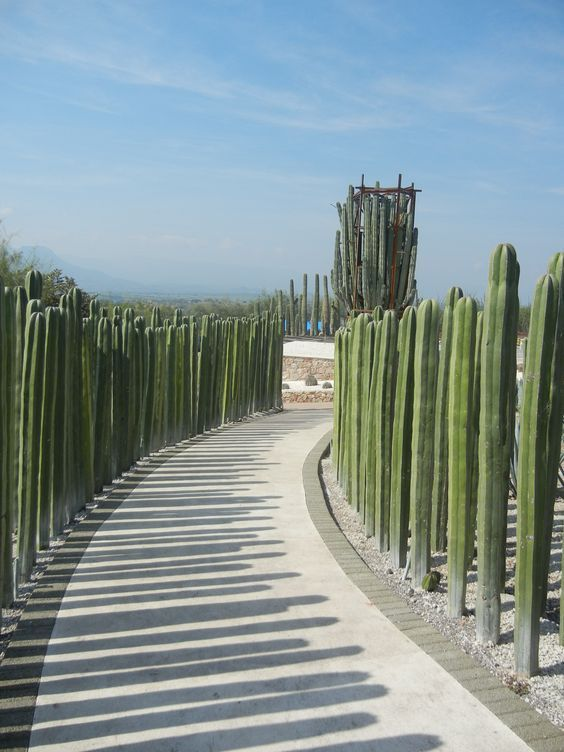 Living Walls And Fences Are A Natural Choice Desert Backyard Landscape Design Tall Cactus