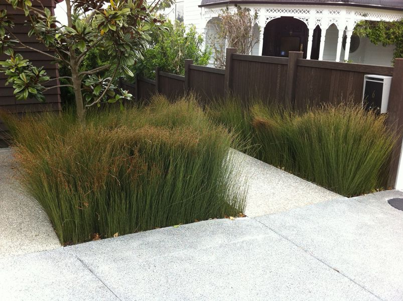 Native mass planting nz google search landscaping for Mass planting grasses
